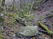 20. 石に埋もれた廃林道DSC03251.JPG