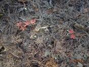 23. 幼木も紅葉DSC03332.JPG