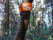 24 オレンジの標識DSC03439.JPG