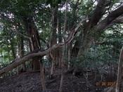 26 大木地帯DSC03608.JPG
