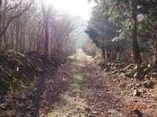 27. 林道を西へDSC03265.JPG