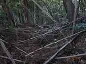 27 竹林の中の通路?DSC03609.JPG