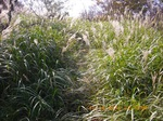 27IMGP6170先は草に覆われている.JPG