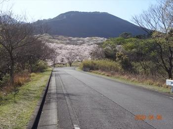 (01) 昨日野焼きされた大平山zoom DSC07348.JPG