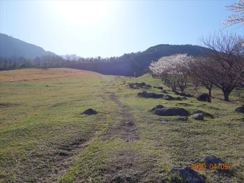 (03) 桜の園沿いに上るDSC07354.JPG