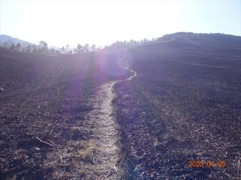 (04) 野焼き跡の間を上るDSC07355.JPG