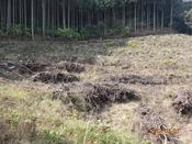(07)伐採地DSC05414.JPG