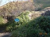 (10) 北東登山口DSC08157.JPG