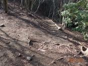 (12) 北登山口への下りDSC08207.JPG