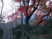 (12) 紅葉1DSC08162.JPG