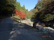 (1) ふるかわ橋下流の紅葉DSC06672.JPG
