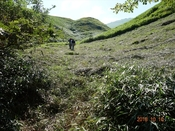 (14) 林道終点からの登山道DSC06361.JPG