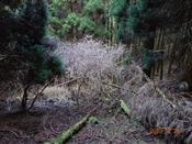 (14) 白い木の葉DSC08209.JPG