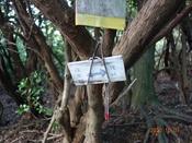 (14) 鍋山分岐の標識DSC07896.JPG