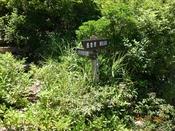 (15) 山道へDSC07791.JPG