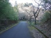 (16) 道は小山を巻いて右へDSC06835.JPG