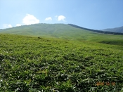 (18) 山頂を仰ぐDSC06365.JPG