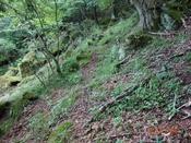 (18) 登山道(1)DSC07665.JPG