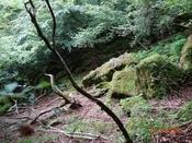 (19) 登山道(2)DSC07666.JPG