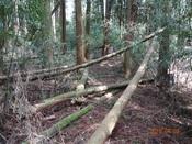 (22) 倒木が行く手を阻むDSC04682.JPG