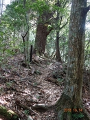 (28) 大木が多くなるDSC06450.JPG