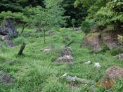 (30) 草地の中のオアシスDSC07686.JPG