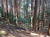 (30)杉の美林DSC05448.JPG