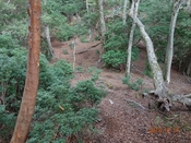 (52) 優しい登山道DSC06479.JPG