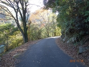 (5) 豊栄林道の紅葉DSC06665.JPG