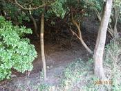 (6) 林中へDSC07871.JPG