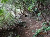 (7) 狸峠への山道-1 DSC07872.JPG