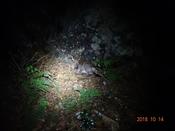 (73) 小鹿DSC06507.JPG