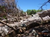 (5) また土石流の跡を辿るDSC07772.JPG