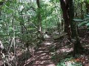 (5) 指山観察道風景DSC06296.JPG