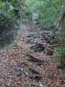 (7) 木の根の階段DSC08038.JPG