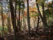 (8) 山頂手前の紅葉 DSC08082.JPG