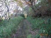 (9) 春木川沿いの林道DSC08156.JPG