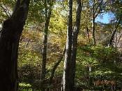 30.聳え立つ高木(1)DSC01131.JPG