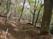 30 美しい山道DSC05269.JPG