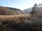 31. 湿原冬景色DSC03272.JPG