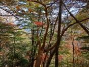 31.聳え立つ高木(2)DSC01132.JPG