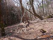 32 冬枯れの山道(1) DSC05371.JPG