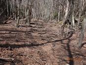 34 冬枯れの山道(3) DSC05376.JPG