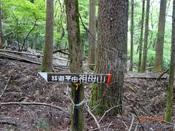 34林道コース標DSC02075.JPG