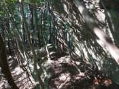 38.潅木が多くなるDSC02998.JPG