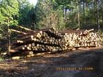 39IMGP6743木材の集積.JPG
