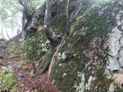 40.三国岩を振返るDSC02304.JPG