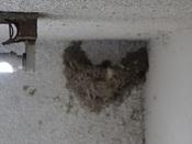 41. ツバメの巣(1) 子育て用 DSC02238 .jpg