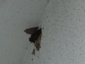 42. ツバメの巣(2) 07月20日 DSC02363trim.jpg
