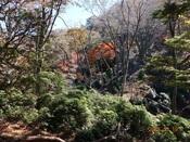 42.紅葉風景2DSC01151.JPG